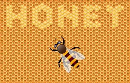Background with honeycombs and bee. Vector illustration. Illustration