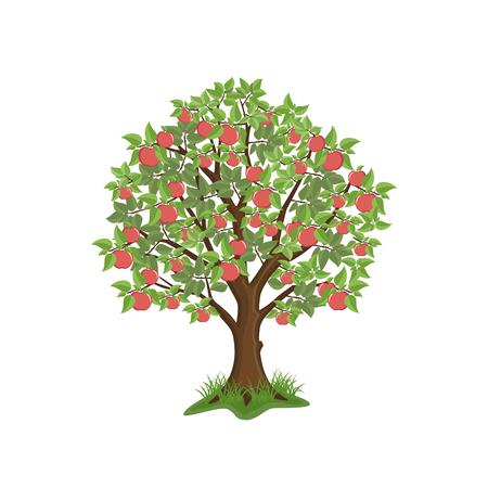 Apple tree with red fruits on white background. Isolated vector illustration. Illustration