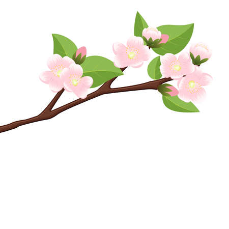 Branch of  blossoming apple. Flowers on a spring tree. Isolated vector illustration on white background.