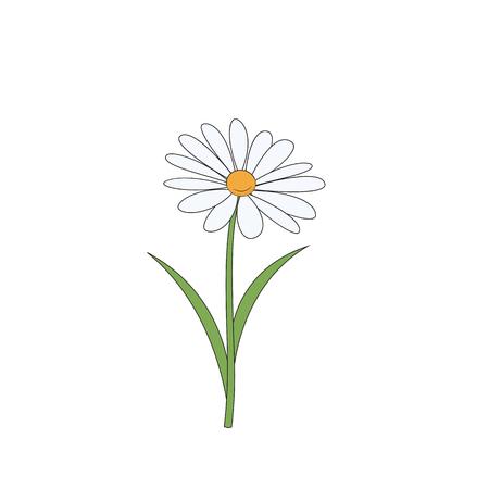 Cartoon daisy. Simple flower on white background. Vector illustration.