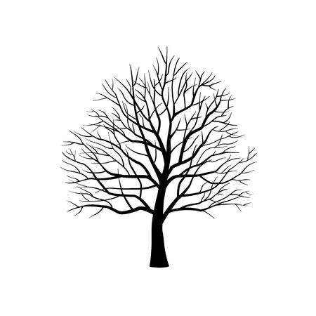 Na białym tle sylwetka drzewa bez liści na białym tle. Ilustracji wektorowych. Ilustracje wektorowe