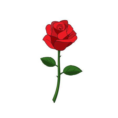 Bloem van rode roos met stengel, bladeren en stekels op witte achtergrond.