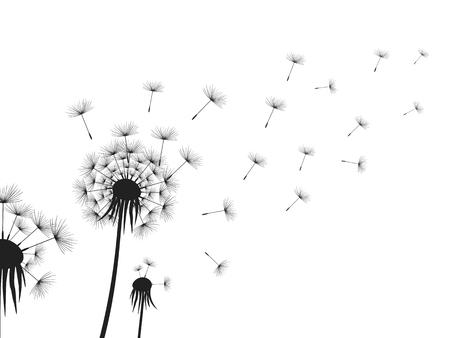 Dandelion flowers on white background. Vector illustration.
