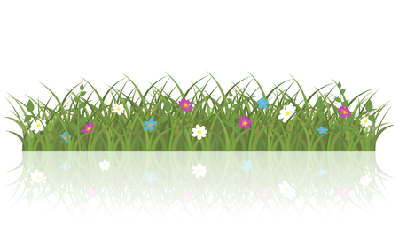 Spring grass and flowers background. Isolated vector illustration on white background. Illustration