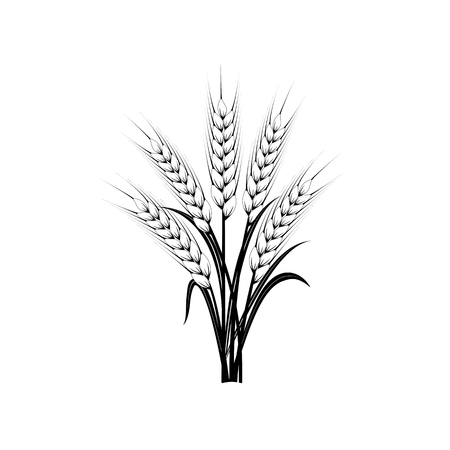 Sheaf of wheat ears. Symbol of organic agriculture and natural harvest. Black silhouettes on white.  Illustration