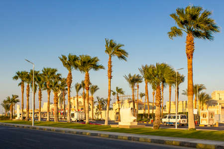 Street with palm trees. Tropical road with palm trees in Egypt