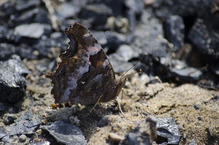 Brown moth sitting on the sand. Closeup, blurred background.