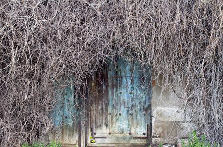 porte ancienne: vieille porte artistique entour�e de branches sans feuilles
