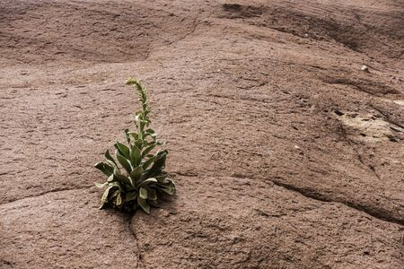 Single Desert Plant Growing from Solid Red Rock in Colorado