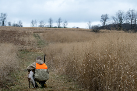 upland: Man Hunting Upland Game with French Brittany Spaniel Stock Photo