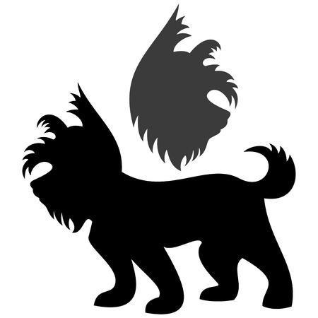 yorkshire: Yorkshire Terrier