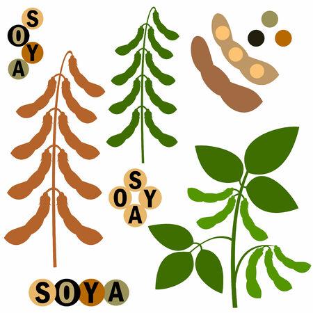 soya: Soya