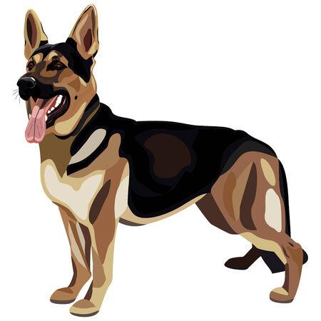 Shepherd dog Иллюстрация