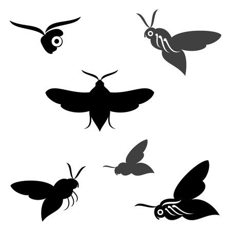 hyles gallii: Butterfly