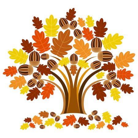 acorn tree: Oak