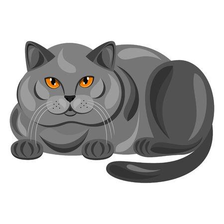 cat: Cat