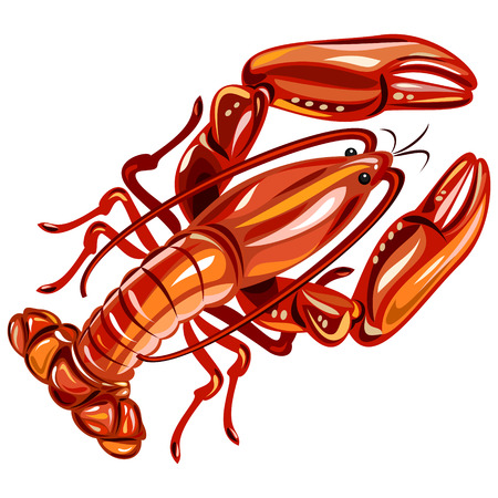 Crayfish Illustration
