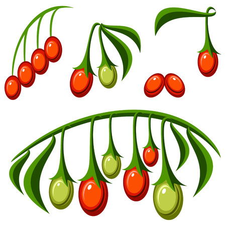 goji: Goji berries Illustration