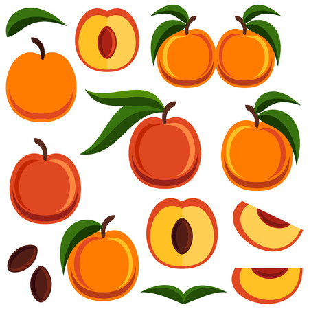 nectarine: Peach on white