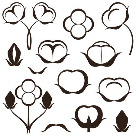 cotton: Cotton illustration