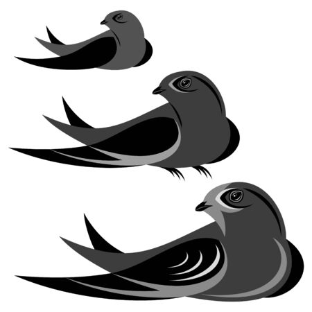Swift illustration