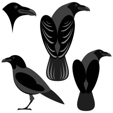 cuervo: Crow ilustraci�n