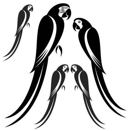 with sets of elements: Macaw illustration