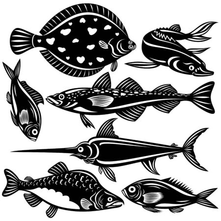 sturgeon: Fish Illustration