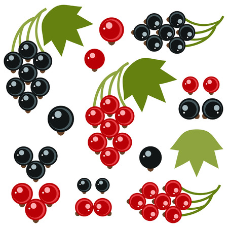 red currants: Currant