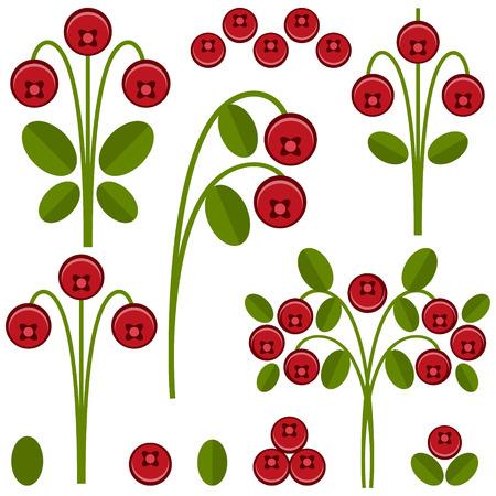 vegetarianism: ?ranberry Illustration
