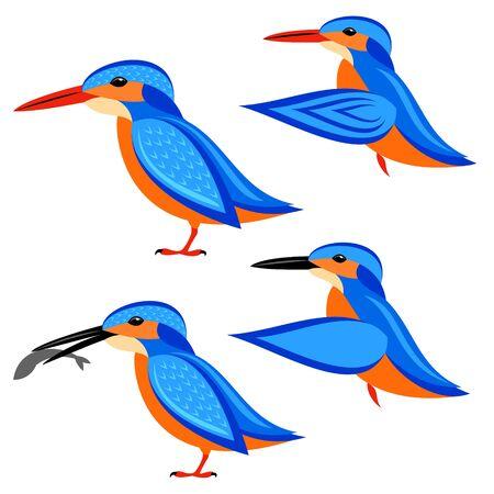 kingfisher: Kingfisher Illustration
