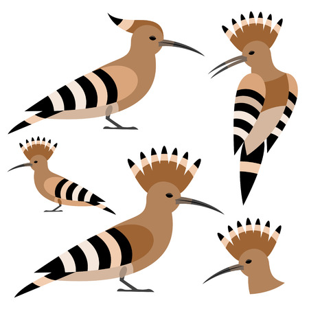 with sets of elements: Hoopoe