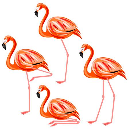 flamingo: Flamingo Illustration
