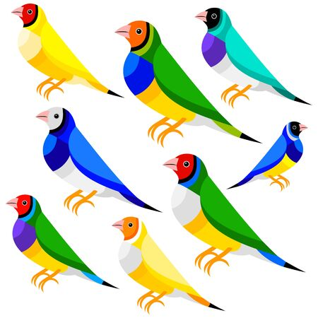 finch: Finch Illustration