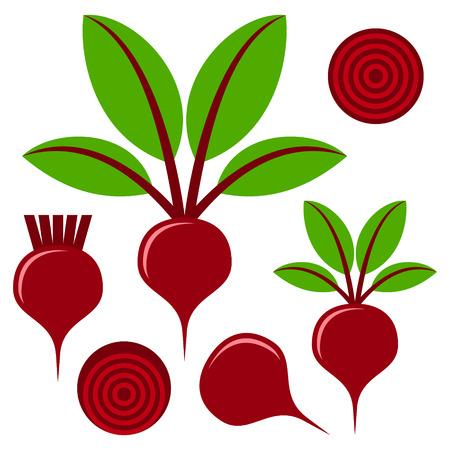 beets: Beet  illustration
