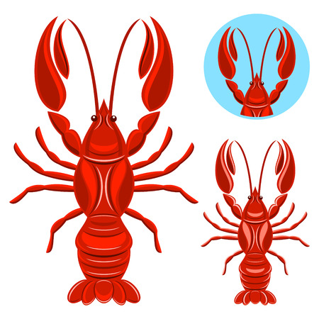 spiny: Crayfish Illustration