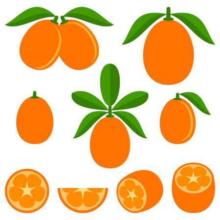 vegetarianism: Kumquat Illustration