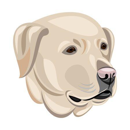 snouts: Labrador