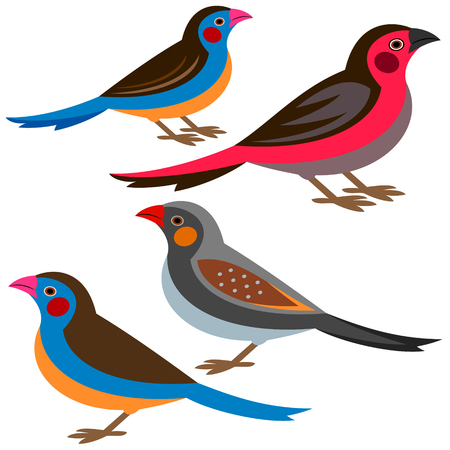 Finch Vector