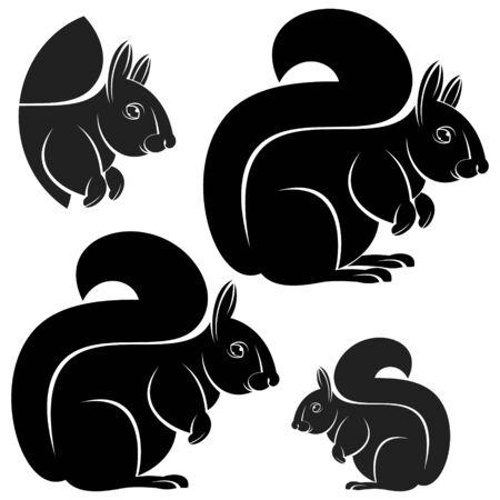 squirrel: squirrel Illustration