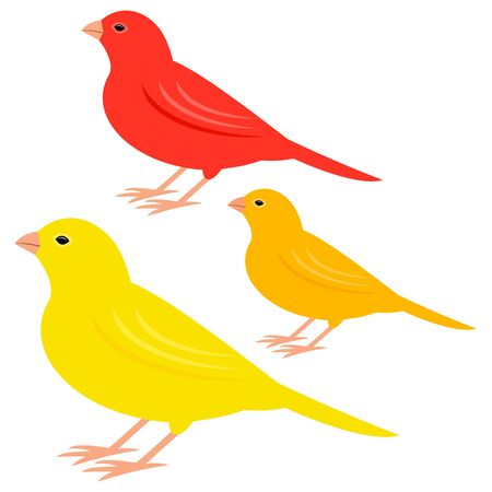 canary: canary