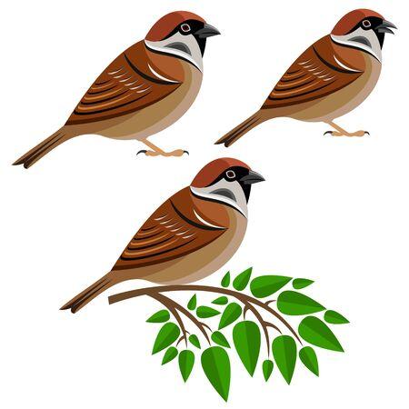 sparrow bird: sparrow