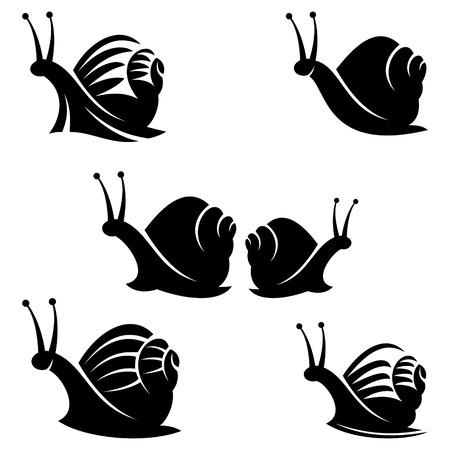 caracol: caracol Vectores