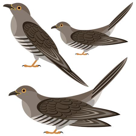 cuckoo: cuckoo