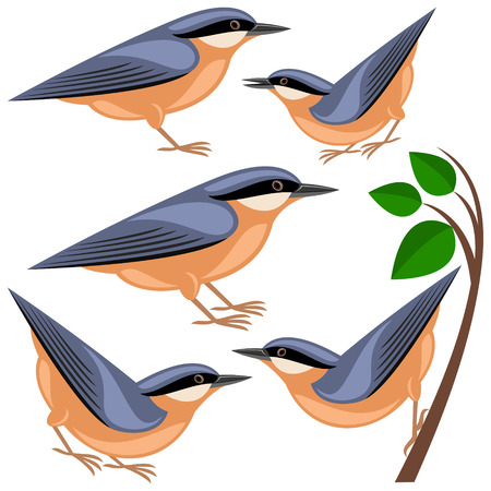 with sets of elements: nuthatch