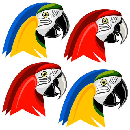 guacamaya: guacamayo Vectores