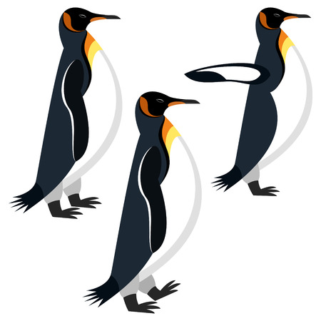 penguin Illustration