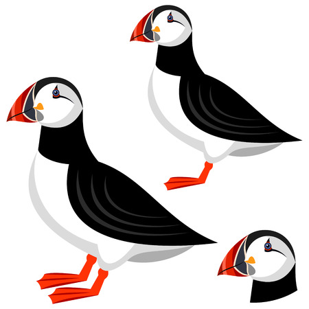 with sets of elements: puffin