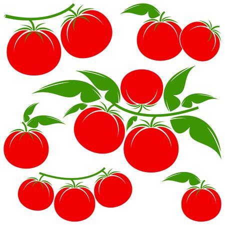 tomato: tomato