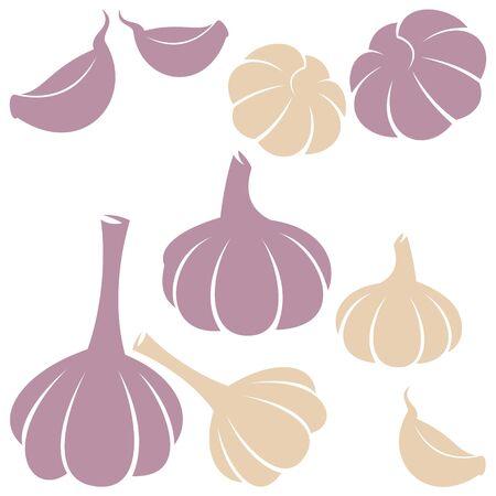garlic: garlic Illustration